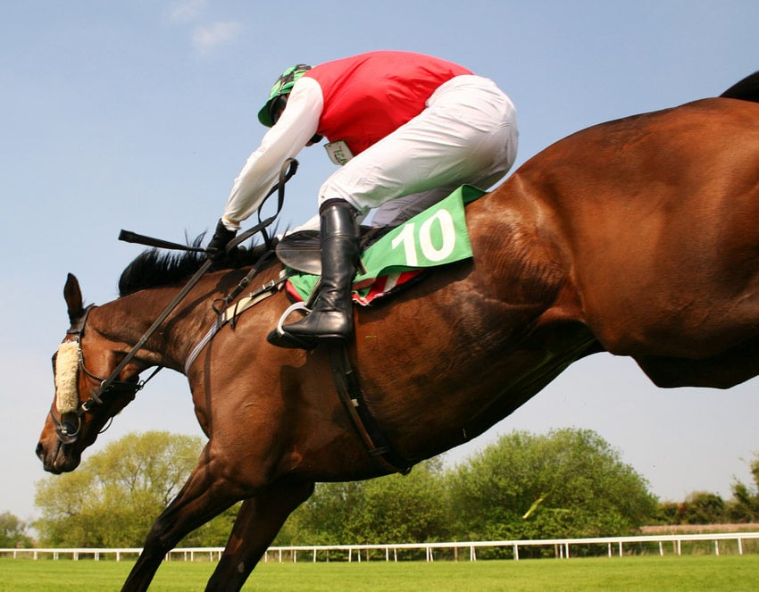 Seabass Grand National Return